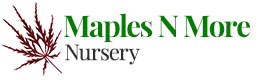 Maples N More Nursery - A nursery that puts our customers first
