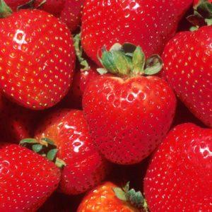 Allstar Strawberries